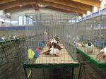 17-18.11.2012r.  Ogólnopolska wystawa gołębi ras niemieckich oraz ras gościnnych i drobnego inwentarza